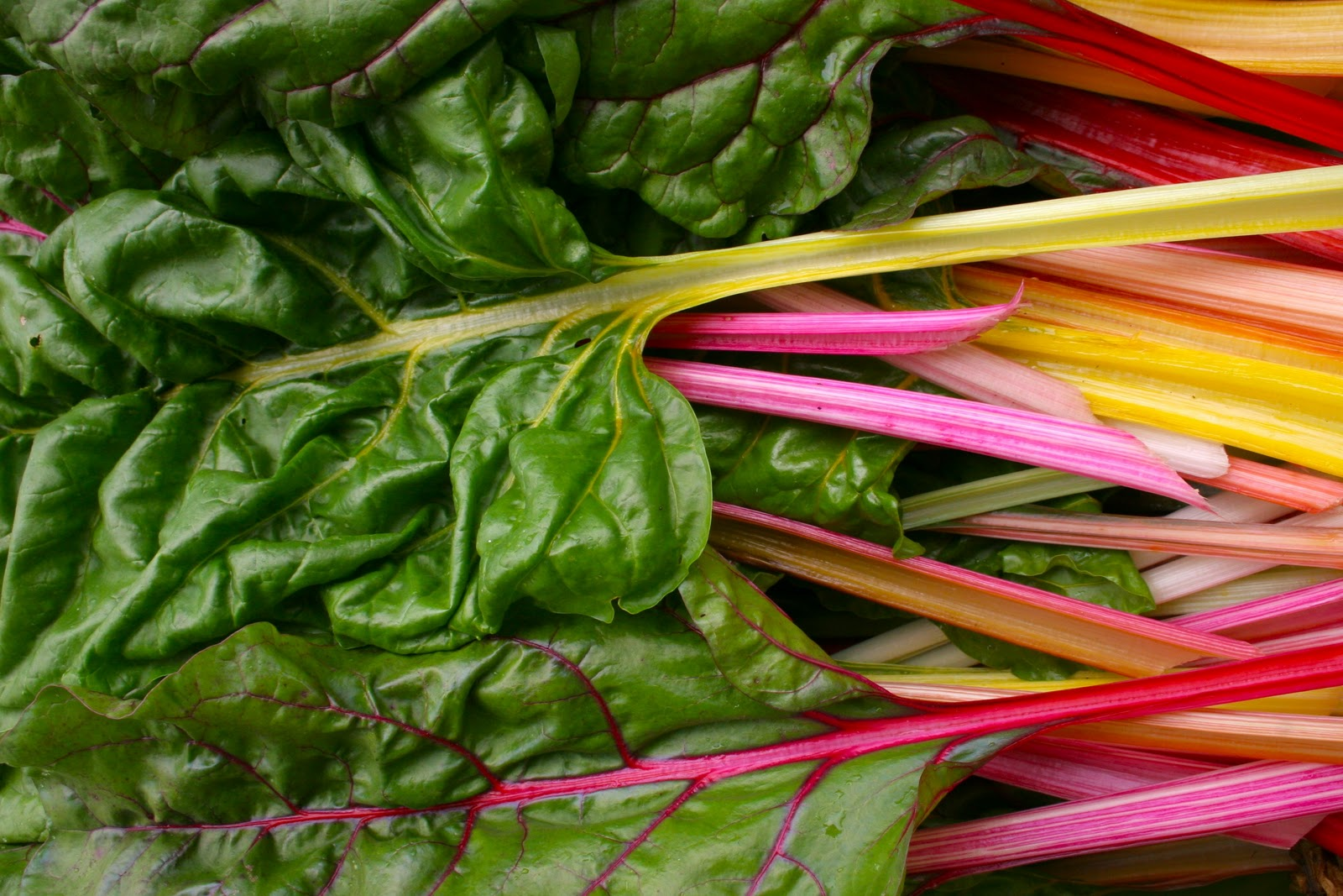 Rainbow Swiss Chard Recipe — Dishmaps